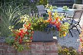 Autumnally planted slate box on garden wall