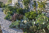 Vegetable and herb bed in front of retaining wall