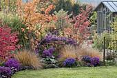 Indian summer in the autumn garden