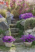 Natural stone staircase leads to the perennial garden