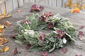 Autumnal wreath of Stachys byzantina leaves