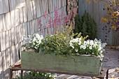 Wooden box with Heuchera, Viola cornuta
