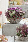 Baskets with autumn plants - Calluna 'Garden Girls' 'Beauty Ladies'