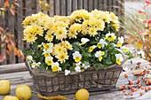 Metall-Körbchen herbstlich bepflanzt mit Chrysanthemum