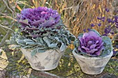 Violet cabbage in conical pots, lavender wreath