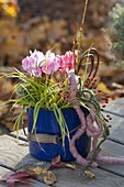 Blue enamel pot with Cyclamen and Carex