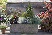 Homemade wooden box planted in autumn, Festuca cinerea 'Azurit'