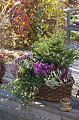 Autumn basket, Picea abies, Calluna Twin-Girls