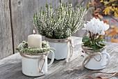 Small arrangement with white enamel pots, Calluna 'Alicia'