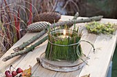 Small lantern with pine needles disguised on birch pane