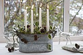 Simple Advent arrangement in zinc jardiniere by the window, white candles