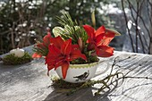 Small bouquet of Hippeastrum (Amaryllis) and Pinus (pine)