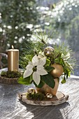 Euphorbia pulcherrima (Poinsettia) Christmas bouquet