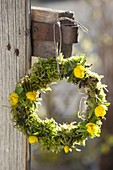 Wreath with moss and eranthis (winter aconite)