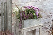 Gray box with chrysanthemum, Erica gracilis