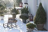 Snow covered winter terrace with conifers