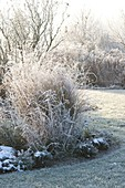 Winter garden with grasses, perennials and shrubs in hoarfrost