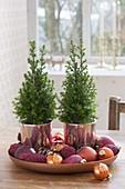 Chamaecyparis thyoides 'Top Point' (white cedar, cone cypress)
