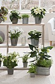 Shelf with white plants as a room divider