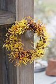 Small wreath of mixed Hamamelis 'Arnold Promise' flowers