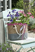 Aquilegia, in basket bag as a gift on chair