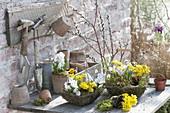 Plant spring baskets, Eranthis, Scilla