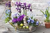 Zinc bowl with Iris reticulata (Netziris), Viola cornuta