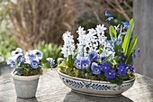 Ceramic bowl and pot with viola cornuta (horn violet), scilla