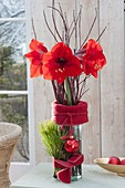 Christmas Lights Bouquet of Hippeastrum (Amaryllis)