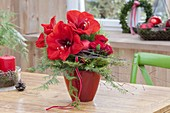 Red Christmas Bouquet of Hippeastrum (Amaryllis), Pink (Rose)