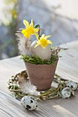 Small Easter decoration terracotta pot with moss, Narcissus flowers