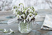 Posy with Galanthus nivalis in mason jar