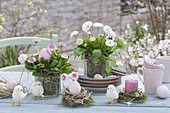 Easter table decoration with Bellis perennis 'Tasso Strawberries & Cream'