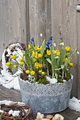 Gray pot with Eranthis (winterling), Scilla (blue oysters)