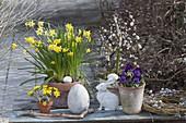 Narcissus 'Tete A Tete' (Daffodil), Salix 'Kilmarnock'