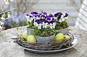 Viola cornuta (horn violet) in small tin pots in wreath