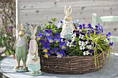 Wicker wreath planted with viola cornuta (horn violet), rosemary