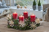 Natural Advent wreath of Abies (fir), Cornus (dogwood)