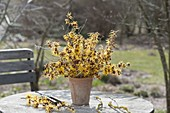 Witch hazel (witch hazel) twigs bouquet