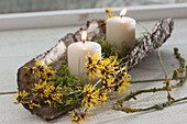 Candles with moss in bark, small branch with fragrant witch hazel