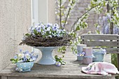 Light blue table decoration of viola cornuta and myosotis