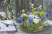 Lantern in glass bowl with muscari (grape hyacinth), viburnum