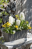 White-yellow planted basket box