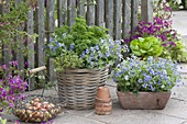 Basket and box with viola odorata, parsley