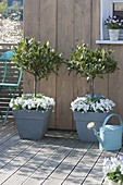 Spring terrace with gray boxes and tubs