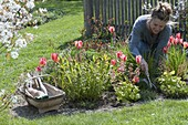 Spring flower bed with tulips