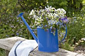 Watering can used as a vase, Brunnera