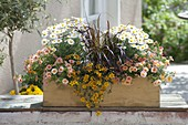 Yellow box with Calibrachoa Aloha Kona 'Mango'