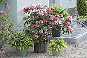House entrance with rhododendron and funkies