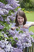 Woman cutting lilac in spring garden